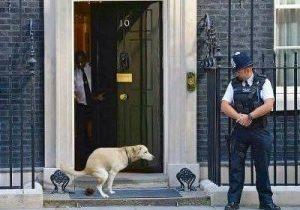 dog No10